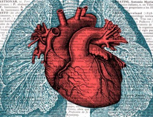 12 Datos sorprendentes del corazón humano que ni te imaginabas
